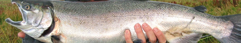 Wild Salmon Fishing header image 3